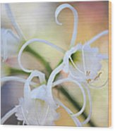 Spider Lily 3 Wood Print