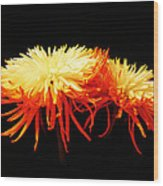 Spider Mums Wood Print by Yvonne Scott