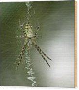 Spider Wood Print by Odon Czintos