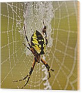 Spider Power Wood Print