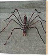 Spider Wood Print by Scott Faucett