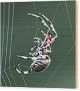 Spider - The Spinner Wood Print