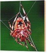 Spider Weaving Wood Print
