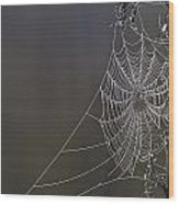 Spider Web Covered In Dew Drops Wood Print