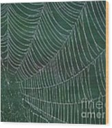 Spider Web With Dew Drops Wood Print