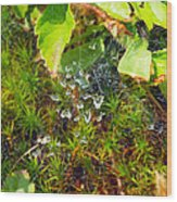 Spider Webs At The Farm Wood Print