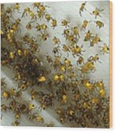 Spiders Spiders Spiders Wood Print