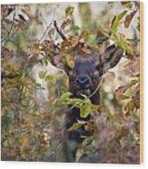 Spike Elk In Brush Wood Print