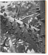 Spiked Limbs Wood Print