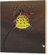 Spiked Spider Gasteracantha Sp In Web Wood Print