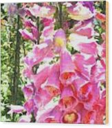 Spikes Of Pink Foxgloves Wood Print