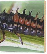 Spiky Caterpillar  Wood Print by Maureen  McDonald
