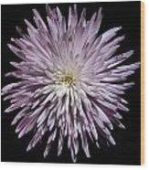 Spiky Flower Wood Print