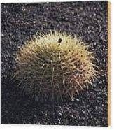 Spiky Wood Print