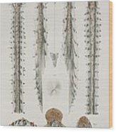 Spinal Cord Anatomy, 1844 Artwork Wood Print