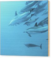 Spinner Dolphins Hawaii Wood Print by Monica and Michael Sweet