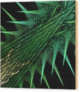 Spiny Branch Wood Print