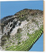 Spiny Chameleon Chamaeleo Verrucosus Wood Print
