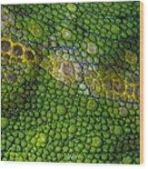 Spiny Desert Rhinoceros Chameleon Wood Print
