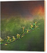 Spirea Sunset Wood Print by Brenda Bryant