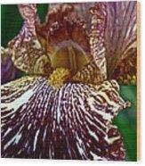Splashed Iris Wood Print