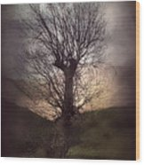 Spook-tree Wood Print