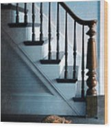 Spooked Cat By Stairs Wood Print