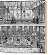 Sports: Gymnastics, 1859 Wood Print