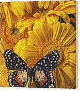 Spotted Butterfly On Yellow Mums Wood Print