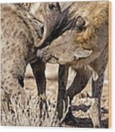 Spotted Hyena Greeting Ritual Wood Print