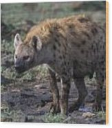 Spotted Hyena Wood Print