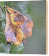 Spotted Oak Leaves In Autumn Wood Print