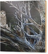 Spotted Owl In Tree Wood Print