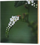 Spray Of White Flowers Wood Print