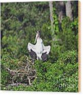 Spread Stork Wood Print
