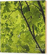 Spring - Beneath The Great Maple Wood Print