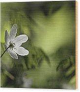 Spring Anemone Wood Print
