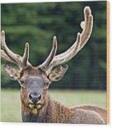 Spring Antlers Wood Print