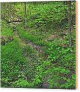 Spring At Cleveland Metro Park Wood Print