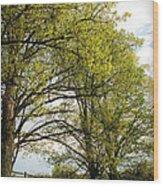 Spring Awaits Wood Print
