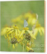 Spring Azure And Friend Wood Print