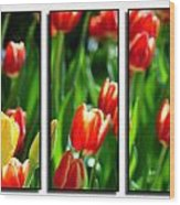 Spring Beauty Triptych Series Wood Print