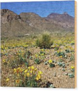 Spring Bloom Franklin Mountains Wood Print