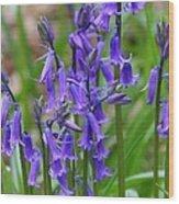 Spring Blue Wood Print