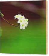Spring Bud Wood Print by Bret Worrell