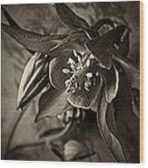 Spring Columbine  Wood Print
