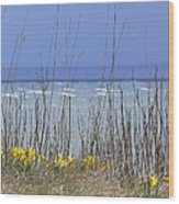 Spring Comes To The Cape Wood Print