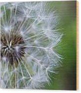Spring Dandelion Wood Print