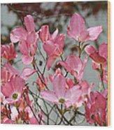 Spring Dogwood Tree Flowers Art Prints Pink Flowering Tree Wood Print