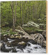 Spring Dogwoods On The Little River - D003829 Wood Print